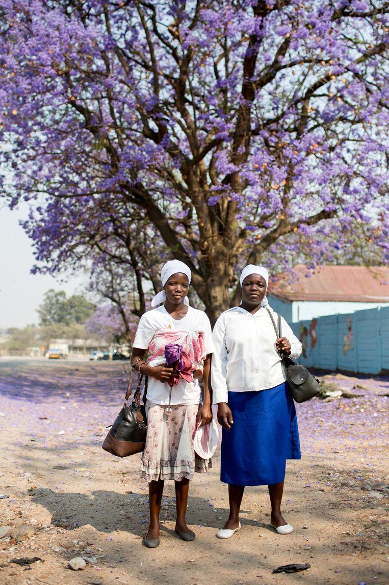 Bloeiende jacarandabomen in Harare. Beeld Julius Schrank