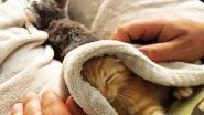 Brandweer redt kittens uit riool