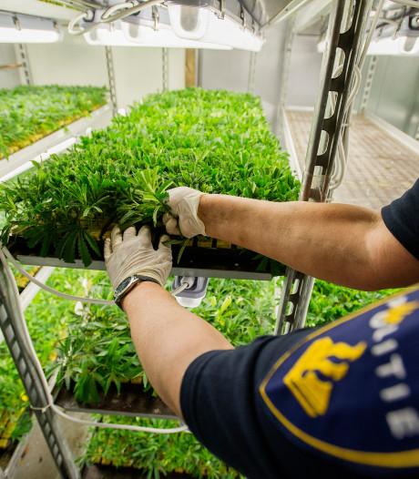Kwekerij met 12.000 hennepstekjes aangetroffen in Enschede: man (30) aangehouden