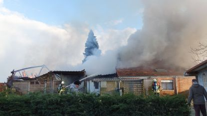 Huis en schuur verwoest na felle brand