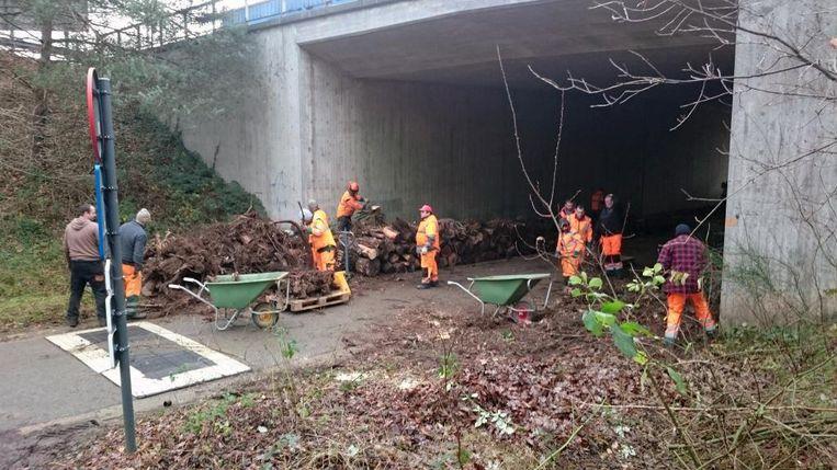 Nu hebben arbeiders een afscheiding van boomstronken in de ecotunnel 't Hellegat gebouwd.