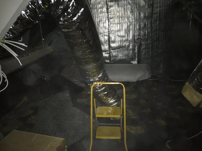 Hennepkwekerij in Rosmalen aangetroffen.