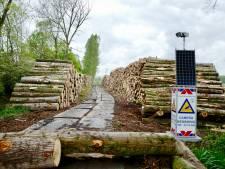 Oerbos verdwijnt voor Nederlandse biomassa