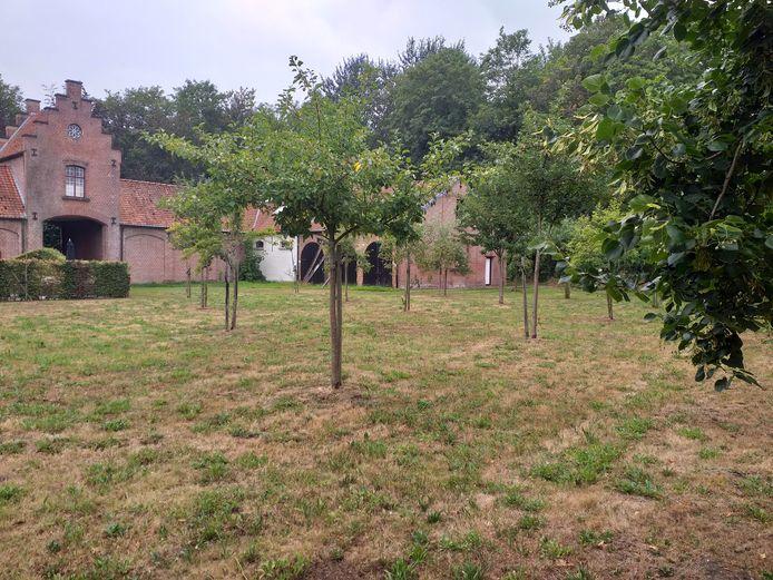 De boomgaard op het domein de Renesse in Oostmalle staat er nu wat verloren bij, maar het moet op termijn weer een echte ontmoetingsplaats worden en het fruit moet dienen om eigen streekproducten te maken.