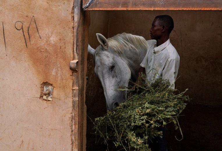 Een medewerker van de ruitervereniging van Khartoem geeft een paard te eten. Vanwege de protesten in de Soedanese hoofdstad die leidden tot de val van dictator Omar al-Bashir kan de vereniging minder wedstrijden organiseren. Beeld REUTERS