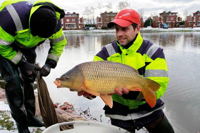 Vanaf dinsdag gaat waterschap Hollanse Delta de visstand onderzoeken, te beginnen bij de Gaatkensplas en Koedoodse Plas in Barendrecht. Foto ter illustratie.