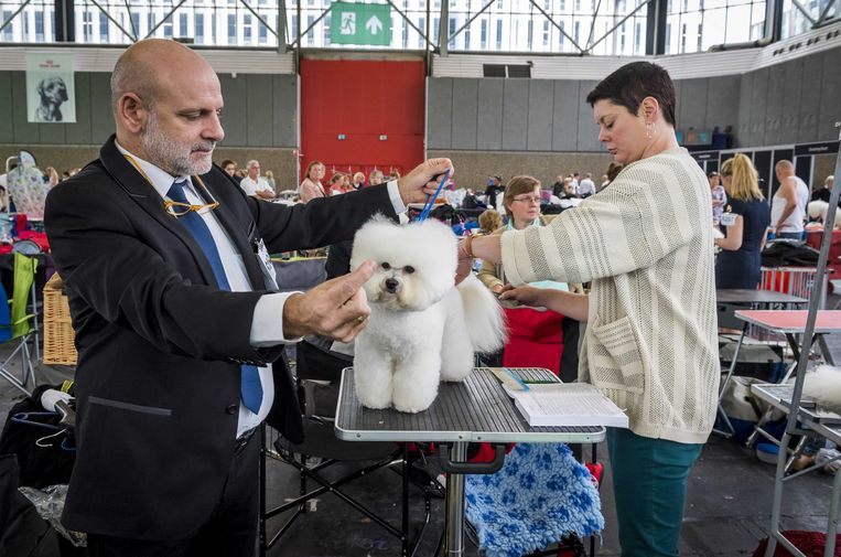Honden worden gekeurd tijdens de World Dog Show in de RAI, het grootste hondenevenement ter wereld.