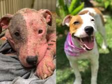 Levend begraven, verminkte hond weer springlevend
