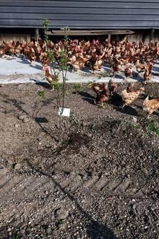 Kippenboer: Heerlijk dat die dieren weer naar buiten kunnen