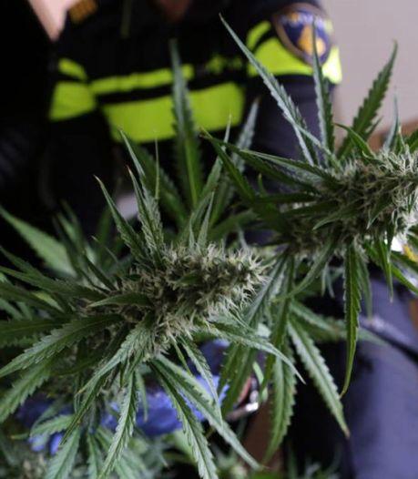 Inbrekers verraden wietkwekerij met 200 wietplanten in Roosendaalse woning