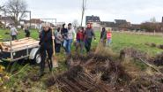 Nieuw geboortebos met 100 bomen aangeplant