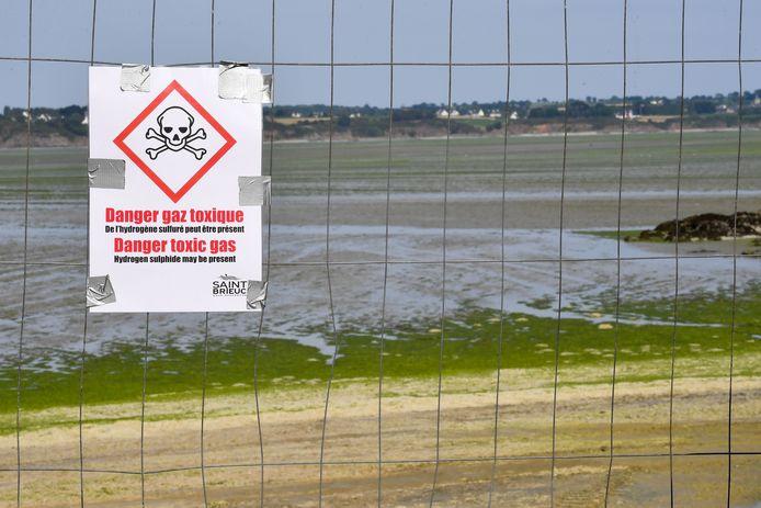 Les algues vertes, apparues il y a un demi-siècle, ont couvert jusqu'à 4.100 hectares en 2008 en Bretagne, région où le phénomène est le plus massif. Elles restent un fléau même si leur volume tend à baisser (1.860 ha en 2018).