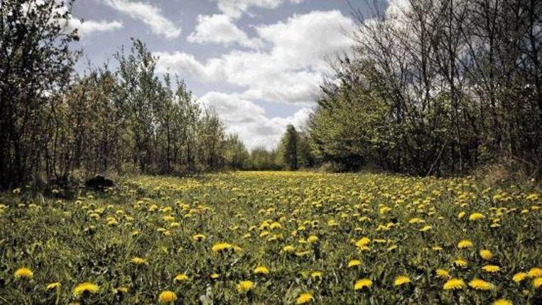 Dit gebied in Drenthe met ruim 80 hectare bos wordt niet meer beheerd en is niet meer toegankelijk voor bezoekers. (FOTO HERMAN ENGBERS) Beeld