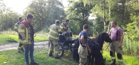 Koets over de kop in Lunteren: berijder raakt gewond, pony's gaan er met koets vandoor