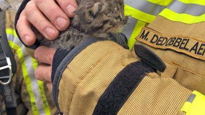 Kitten gered uit brand bij afvalverwerkend bedrijf in Gentse haven