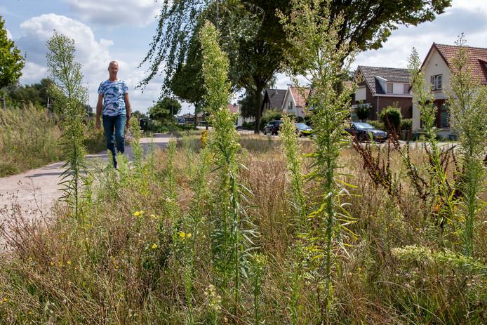 Barend van Voskuilen vindt dat de gemeente het parkje tegenover zijn huis aan de Verlengde Blokkenweg niet goed onderhoudt.