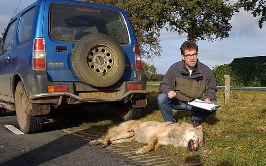 Hugh Jansman deed op locatie onderzoek bij de dode wolf in Kloosterhaar.