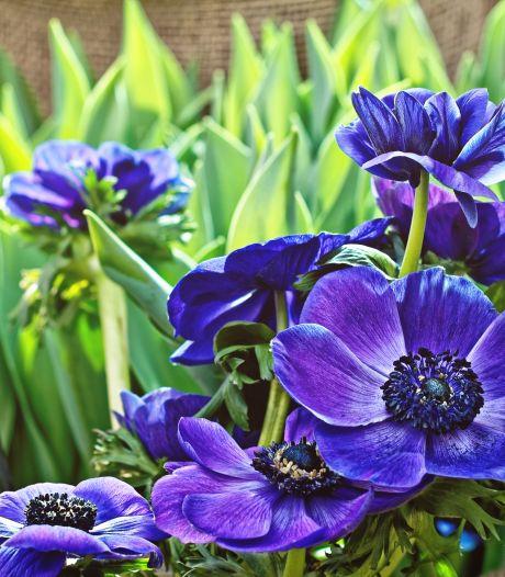 Op de valreep kun je nog snel wat zomerbollen planten