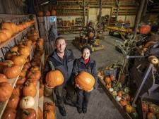 De pompoenen van Ginette en Marc uit Mander zijn beroemd: 'Ik wilde alleen een moestuintje'