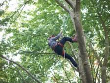 Un jeune jardinier meurt écrasé par un arbre près de Visé