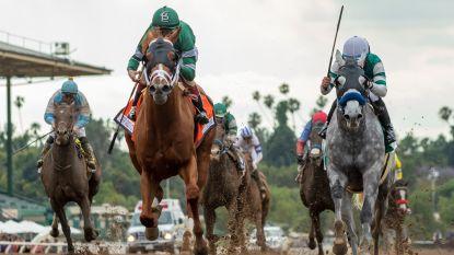 """29 racepaarden dood in Californië: """"Genoeg is genoeg!"""""""