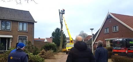 Torenhoge esdoorn wijkt voor nieuw Enters kerkeiland: 'Hopen in april of mei de nog aanwezige woning op terrein te kunnen slopen'