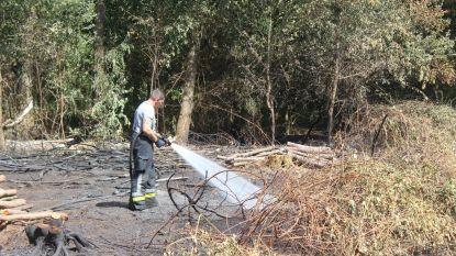 Vuur in bos aan de Zware Beek raakt moeilijk geblust