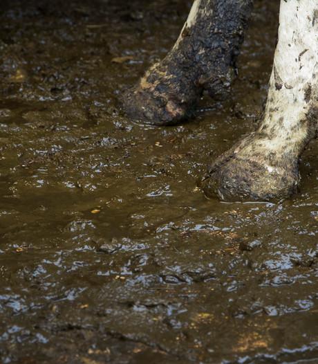 Sint Anthonis wacht op 'sorry' voor kritiek op controle veehouderijen