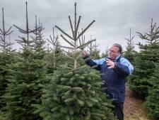 Kerstbomen worden schaars na droge zomer: 'Jonge sparren allemaal dood'