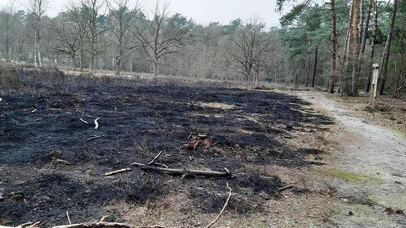 Natuurpunt gaat op zoek naar brandstichter(s) die tien are heide in de assen legde