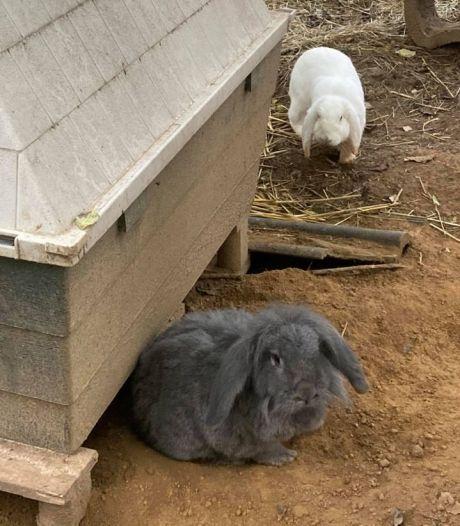 Inzamelingsactie na onthoofding konijn bij dierenweide Elsloo
