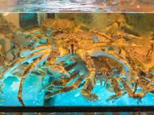 Restaurant onder vuur vanwege omstreden grijpmachine: 'Grijp een krab en kook hem gratis'