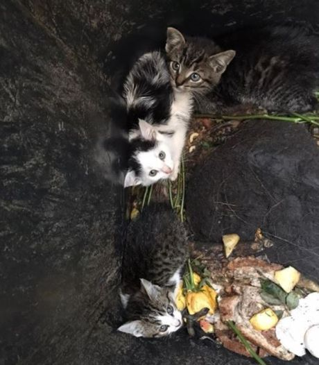 Piepjonge kittens gedumpt in vuilnisbak in Denekamp