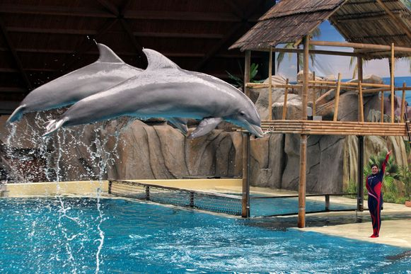 Brugge Boudewijn seapark nieuwe show dolfijnen
