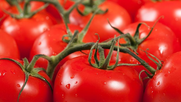 tomaten Beeld colourbox.com