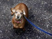 Hondje doodgereden bij crematorium in Nijverdal, bestuurder rijdt door