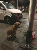 Hond vastgebonden aan lantaarnpaal door jongen die van hem af wil.
