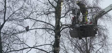 Angstige kat met hoogtevrees valt bij reddingspoging uit Deventer boom