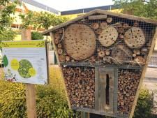Insectenhotel in Meierijstad? Kinderen stemmen hierover