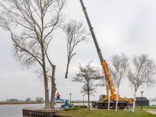 Kale plek bij veerpont Genemuiden na omzagen zieke populieren