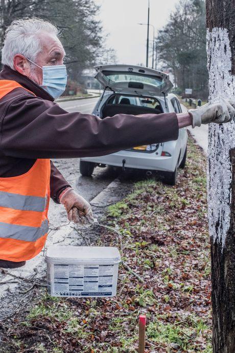 Kruizen als laatste verzetsdaad tegen kap minstens 80 jaar oude bomen in Mook: 'Spaar ze'