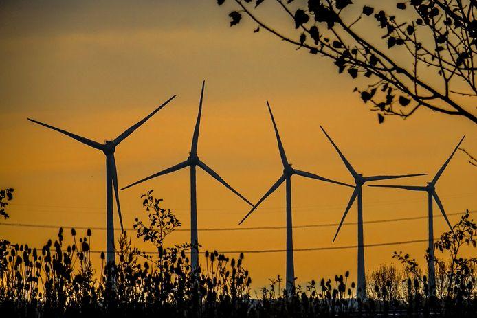 'Wind boven bomen': Oisterwijk wil de ombouw van een naaldbos in een loofbos financieren met de opbrengst van windenergie.