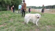 """Nieuw hondenlosloopbos in Lembeek: """"Baasjes ontmoeten elkaar hier terwijl de honden zich uitleven"""""""