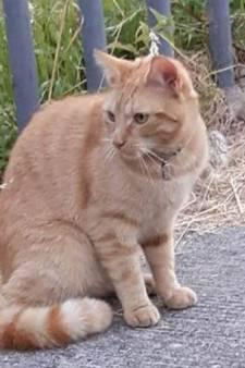 Un chat meurt de ses blessures après un acte de cruauté extrême