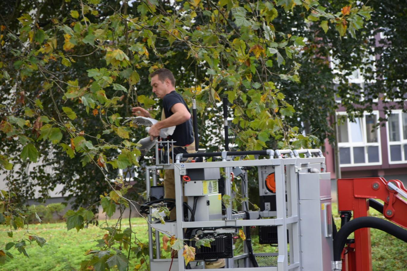 Brandweerman redt meeuw.