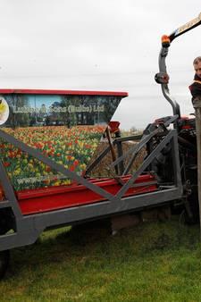 107.714 paarse bloemen bij MH17-monument geplant