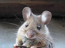 Muizen bij de tent? Rits dicht en eten opbergen