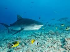 Vrouw overlijdt na aanval haai bij Sint-Maarten