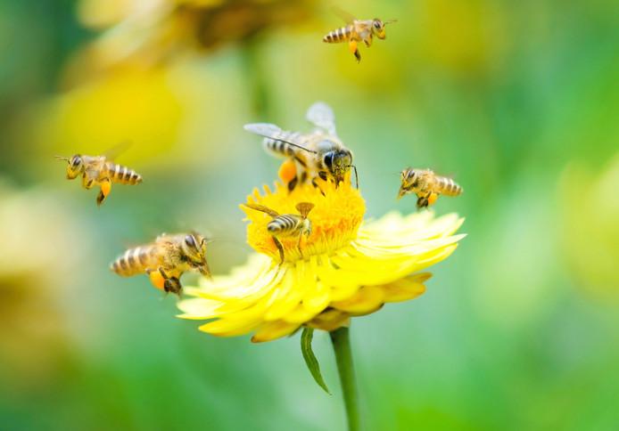 Haaren plant 60.000 bloembollen voor vlinders en bijen. En om de dorpen op te fleuren.
