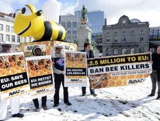 """Greenpeace: """"Verbod op 7 pesticiden nodig om bijenpopulaties te redden"""""""